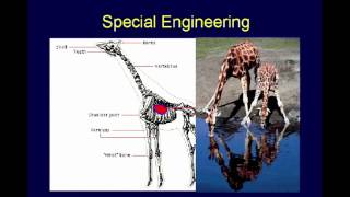The Design of Animals - Chuck Missler