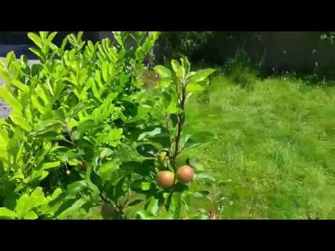 Scrumptious Apple review in Cork, Ireland