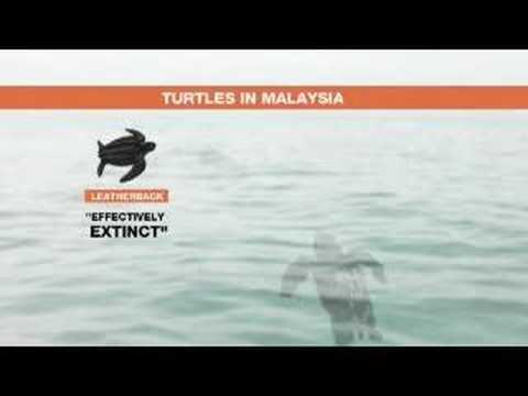 Call to better protect Malaysia's turtles - 23 Oct 07