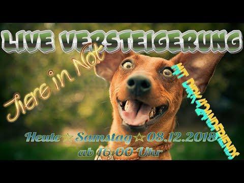 Dirk42andFriends ** Die Live Versteigerung für Tiere  in Not für Verlorene Seelen **