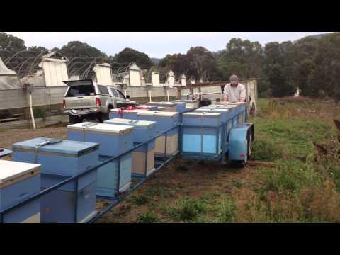 Платформа для кочевки пчел своими руками 42