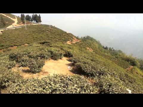 Ilam tea garden Nepal.MOV