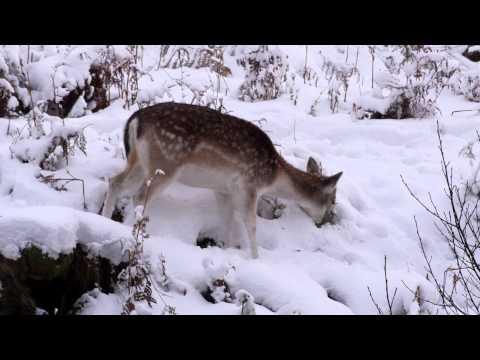Panasonic Lumix DMC GH3 test - All-Intra video in the snow