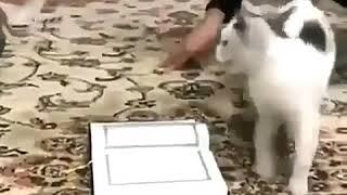 عکس العمل عجیب و جالب گربه نسبت به قرآن