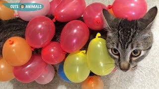 Magic Balloons and Cute Cat 🐱 Cats Vs  Balloons 🎈 Funny and Cute Cats Playing Balloons Compilation