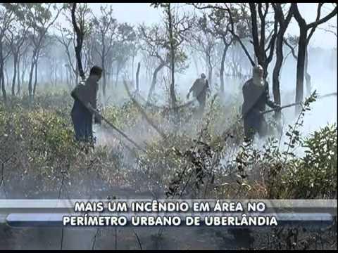 Incêndio em área no perímetro urbano de Uberlândia mobiliza bombeiros