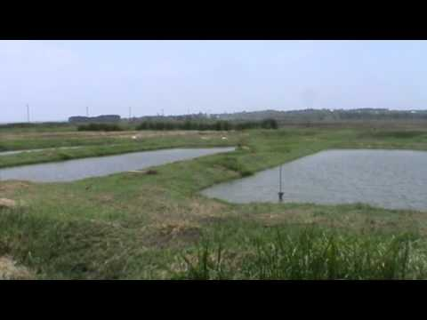 Fish Ponds In Western Kenya  Dominion Farm Aquaculture Project