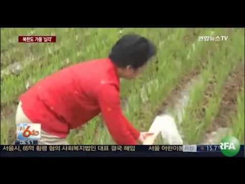 Drought Threatens Crop Production in North Korea