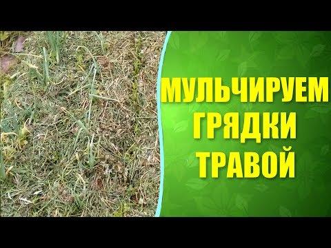 🌾 Мульчирование грядок травой. Как правильно мульчировать грядки?