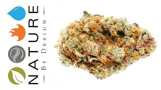 Kryptonite - Strain of the Day