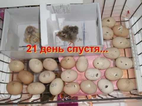 Инкубаторы для куриных яиц своими руками 20