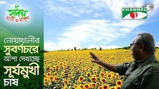 Sunflower farming in Noakhali sees hope