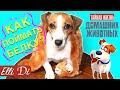 ЛАЙФХАКИ ОТ СОБАКИ | ТАЙНАЯ ЖИЗНЬ ДОМАШНИХ ЖИВОТНЫХ | Elli Di Собаки