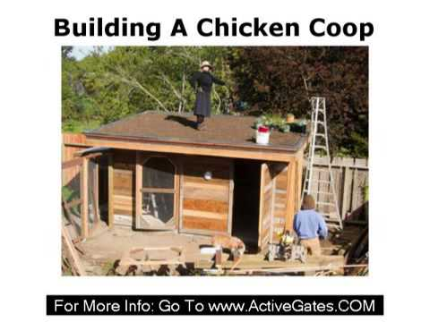 for How to build a chicken pen cheap