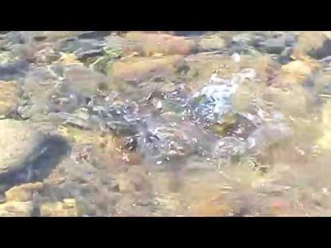 рыбалка на уде нижнеудинск