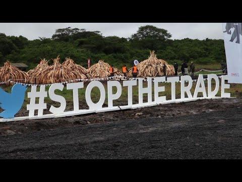 'No more ivory trade' say activists ahead of historic Kenya burn