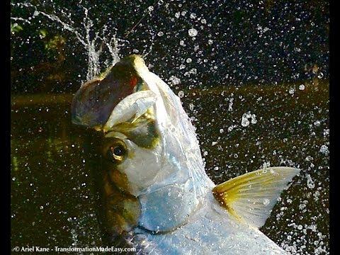 Tarpon Fly Fishing - Costa Rica