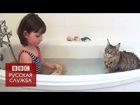 Как кошка помогла девочке с аутизмом