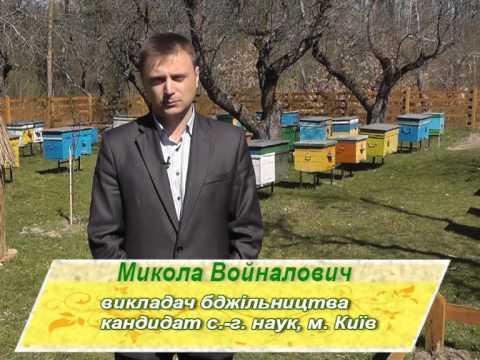 Украинская степная пчела и породное районирование | Новая жизнь - это Я!