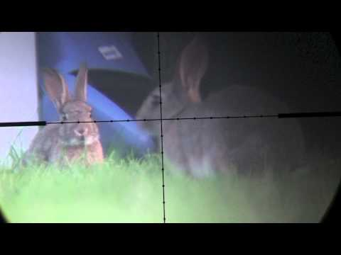 Devon AirGunner August rabbit hunt with Weihrauch HW100