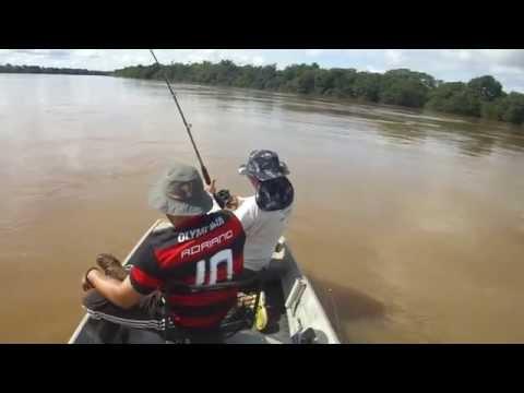 Pescaria De Piraíba Gigante No Rio Araguaia