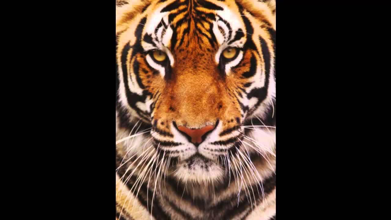 survivor eye of the tiger hd youtube. Black Bedroom Furniture Sets. Home Design Ideas