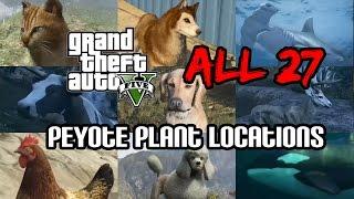 GTA 5 - ALL 27 Peyote Plant Locations 50min video [PS4 / Xbox One]