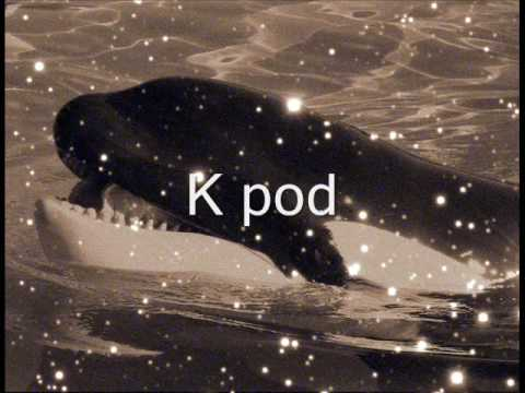Orca sounds
