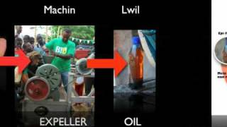 Jp Grows Biodiesel In Haiti To Fight Rural Poverty