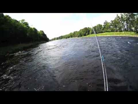 Salmon Fishing Scotland Fly Fishing Benchil River Tay Perthshire...