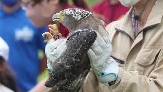 【2020年9月】児童らとカンムリワシの放鳥