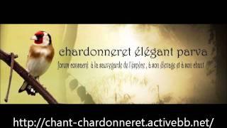 chant chardonneret d