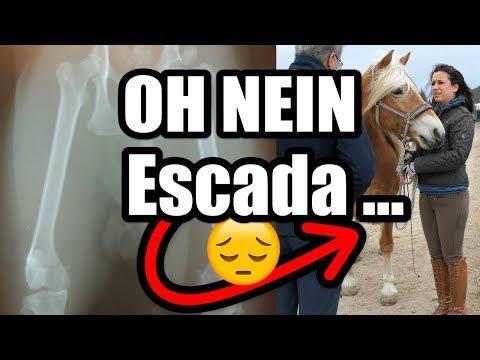 OH NEIN Escada ... Tierarzt-Ergebnis + Röntgenbilder