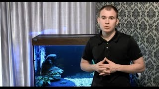 Интерактивный аквариумный туризм Сезон 2 Выпуск 14(Аквариум с пираньями)