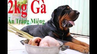 Vlog 1 : Một Bữa Ăn chó Rottweiler 11 Tháng