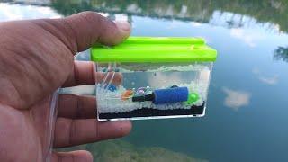 WORLD'S SMALLEST Fish AQUARIUM! (REAL)