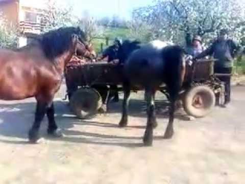 Kobila I Konj