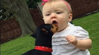 TRY NOT TO AWW! - CUTE BABIES Meeting Dogs For the first time Compilation