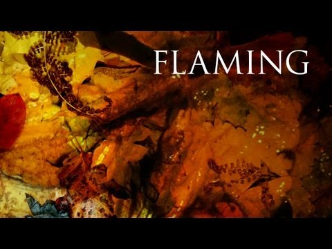 Dark Tranquility - With The Flaming Shades Of Fall