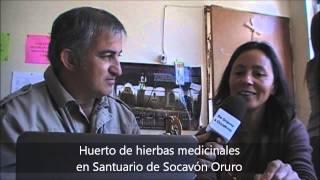 Plantas medicinales cultivadas por niños. Oruro. Bolivia