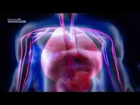 Discovery: Бактерии убийцы  Топ 10
