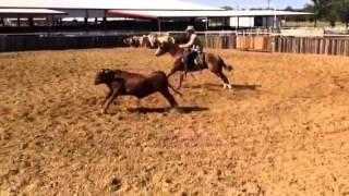 Risto- Jared Lesh cowhorses