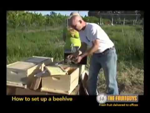 The Best Way to Set Up a Bee Hive