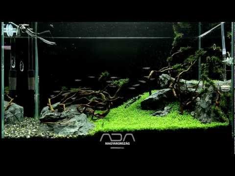Elatine Hydropiper Carpet - Green Aqua Showroom