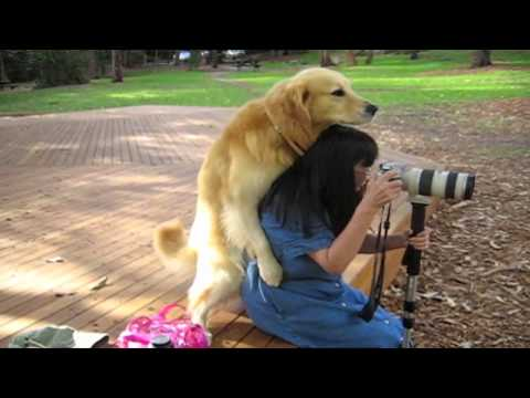 woman-sex-dog-high-quality.html