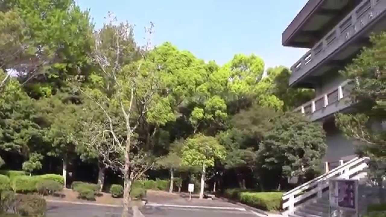 「神宿る島」宗像・沖ノ島と関連遺産群の画像 p1_28
