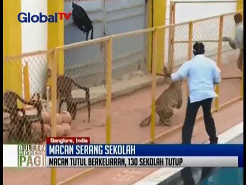 Seekor macan tutul masuk ke sekolah di Bangalore, India - BIP 12/02