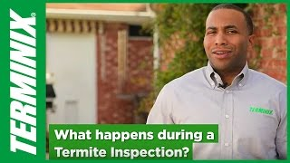 Protect Home From Termites - Termite Inspection Facts - Terminix