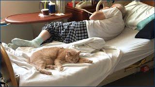 Malati Terminali Di Cancro: Il Gatto Tom - Story With Subtitles In English