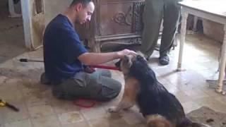 Bemis / Mojave Desert Dogs